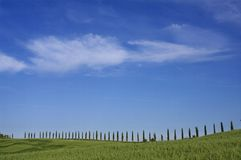 Cypress. A nice view of italian landscape Stock Photo