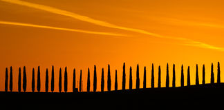 Cypress Стоковое Изображение