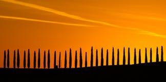 Cypress immagine stock