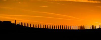 Cypress Стоковое Изображение RF