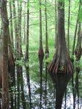 Болото Cypress в Луизиане Стоковые Фото