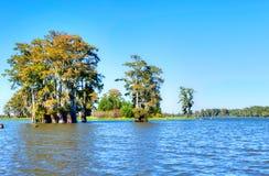 Cypress стоковые изображения rf