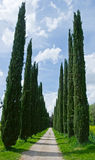 Cypress alley. In  Tuscany, Italy Stock Photos