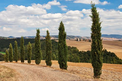 Cypress alley. Royalty Free Stock Photos