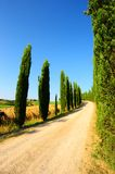 Cypress Alley Stock Photography