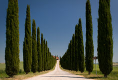 Cypress alley. A long alley of cypress in val d'orcia, tuscany Royalty Free Stock Images