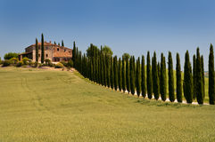 Cypress alley. A long alley of cypress in val d'orcia, tuscany Stock Photo
