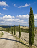 Cypress alley Royalty Free Stock Photo