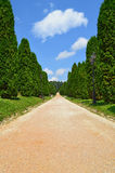 Cypress alley. With gravel path stock image