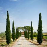 Cypress Alley In Tuscany Royalty Free Stock Photos