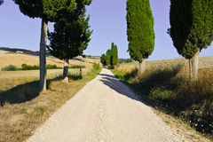 Cypress Alley Royalty Free Stock Photography