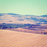 Cypress Alley Royalty Free Stock Images
