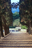 Cypress alley in park Stock Images