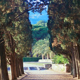Cypress alley in park Stock Image