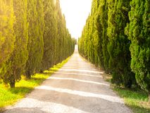 Cypress alley with rural country road, Tuscany, Italy. Royalty Free Stock Photo