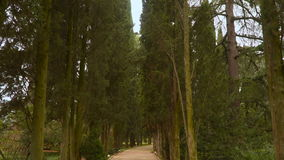 Cypress alley. The south coast of Crimea stock video