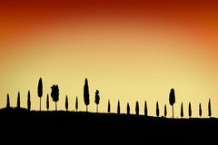 Cypress alley at sunset Royalty Free Stock Photo