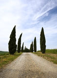 Cypress alley in the Tuscany Stock Photo