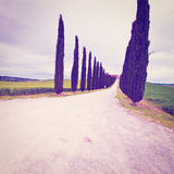 Cypress Alley Royalty Free Stock Photos