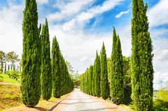 Cypress alley in Tuscany, Italy Stock Images