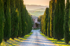 Cypress alley, Tuscany Stock Image