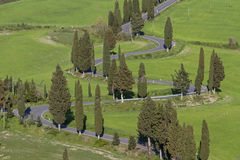 Cypress alley in Tuscany Royalty Free Stock Photo