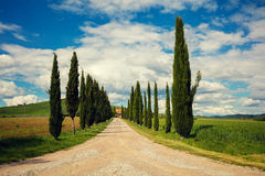 Cypress alley in Tuscany Stock Images