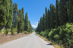 Cypress Alley Tuscany Stock Photo