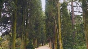 Cypress alley Yalta Crimea stock video footage