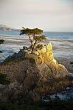 Cypress au littoral près de Pebble Beach dans le coucher du soleil Photographie stock libre de droits