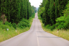 Cypress avenue longest from Italy Royalty Free Stock Photography