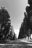 Cypress avenue of Saint Guido Royalty Free Stock Photo