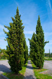 Cypress avenue, symbol of the Tuscan Royalty Free Stock Photo