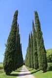 Cypress avenue in Tuscany, Italy Royalty Free Stock Photos