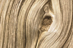 Cypress bark Royalty Free Stock Photos