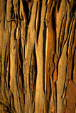 Cypress bark background Stock Images
