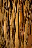 Cypress bark background. Brown longitudinal cypress bark background Stock Images