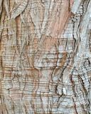 Cypress Bark Background Royalty Free Stock Photos