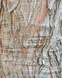 Cypress Bark Background Royalty Free Stock Photos