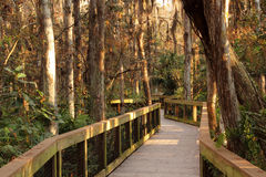 Cypress Boardwalk Royalty Free Stock Image