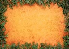 Cypress border Royalty Free Stock Image