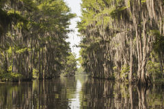 Cypress Byway Stock Photography