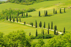 Cypress curve Stock Image