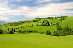 Cypress curve Stock Photography