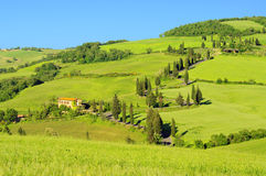 Cypress curve. In Italy, Tuscany Royalty Free Stock Image