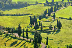 Cypress curve Stock Images