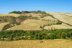 Cypress curve in fall, Tuscany Stock Photography