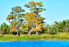 Cypress royalty free stock image