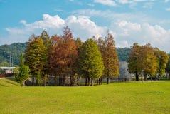 Cypress deciduo con i colori di autunno fotografia stock libera da diritti