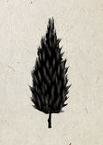 Cypress. Drawing tree on a beige rice paper. Black silhouette wood Royalty Free Stock Image